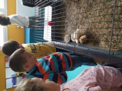 Naissance des petits poussins en maternelle